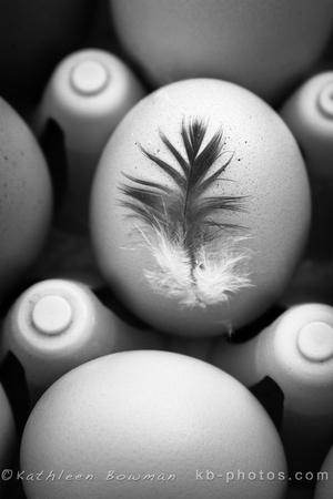 Black and white image of eggs in a crate with feather.