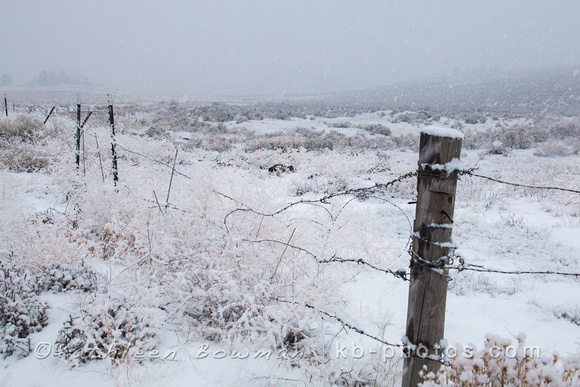 Fence and field during snow storm.